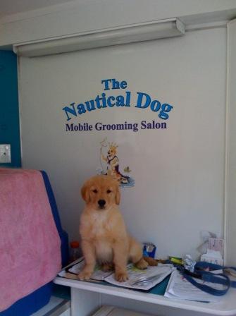 The nautical dog moblie grooming salon bthenauticald solutioingenieria Image collections
